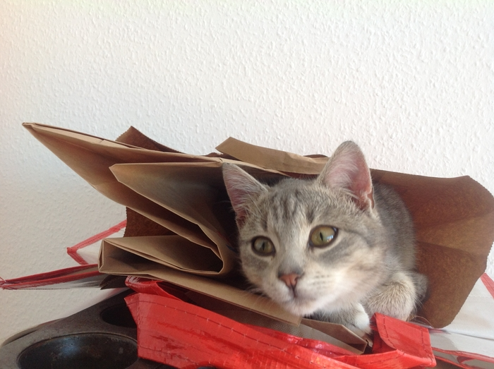 Katze__2014-11-08_10.09.58.jpg