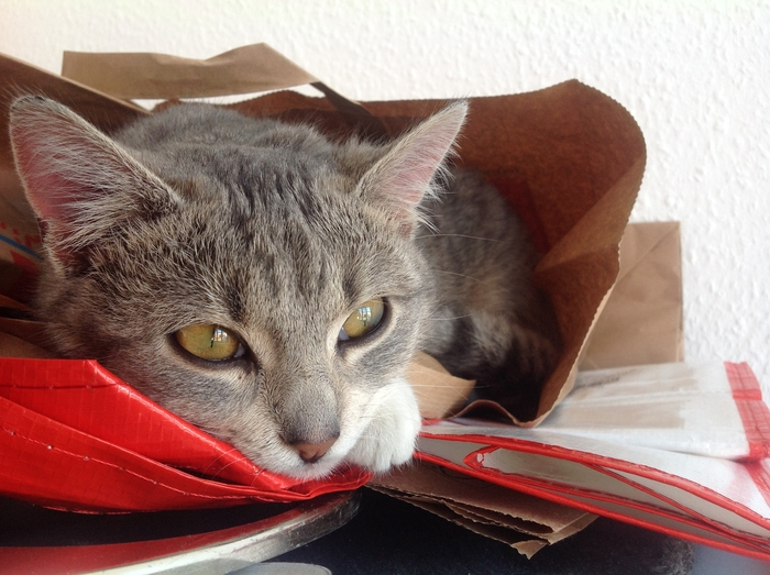 Katze_2014-11-08_10.08.35.jpg