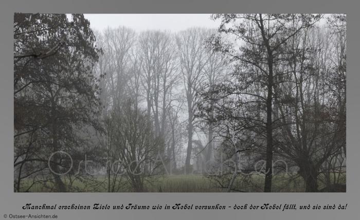 Nebel_Baeume_Text_1.jpg