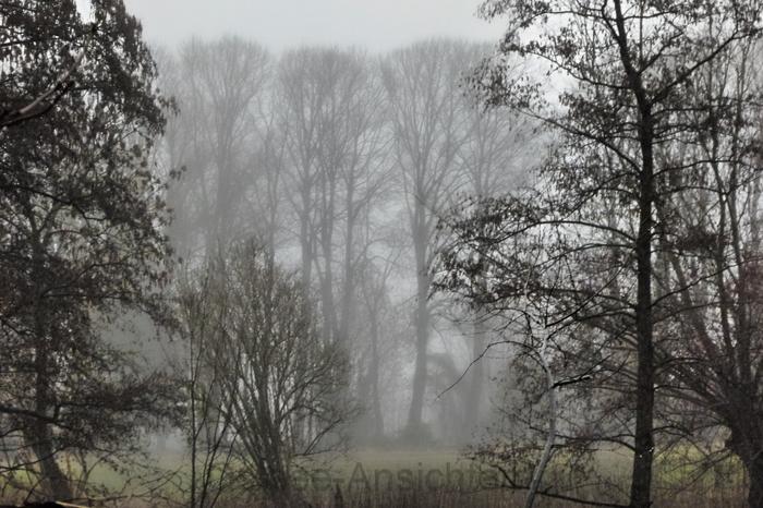 Nebel_Baeume_1.jpg