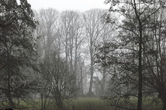 Nebel_Baeume_2.jpg