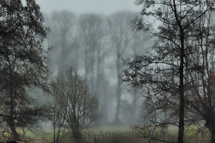 Nebel_Baeume_3.jpg