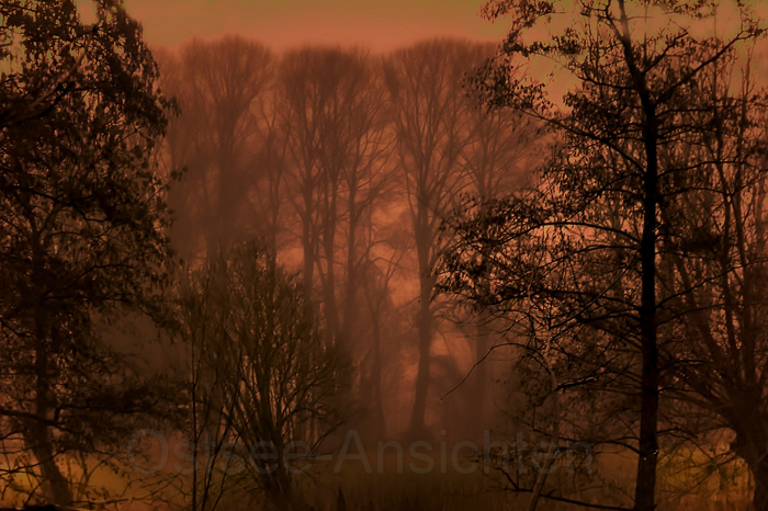 Nebel_Baeume_4.jpg