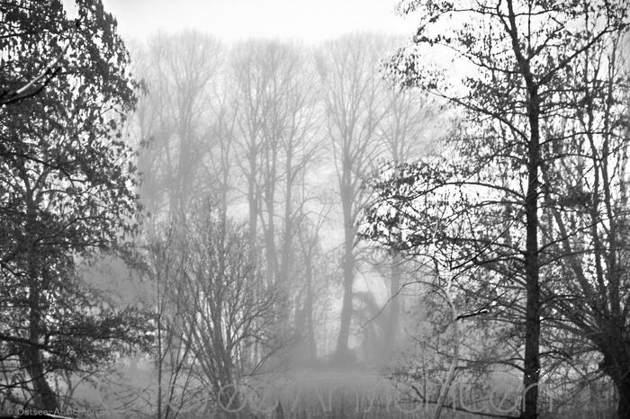 Nebel_Baeume_SW.jpg