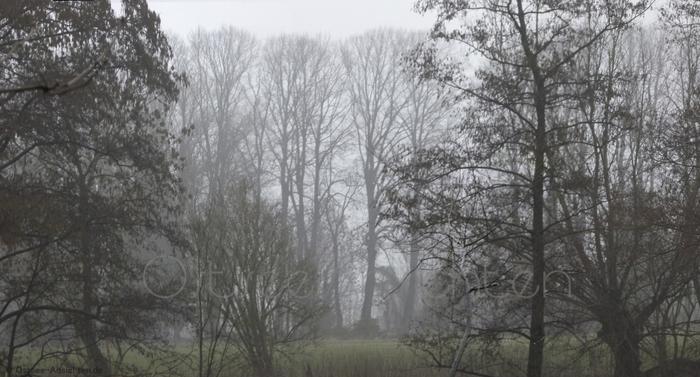 Nebel_Baeume_5.jpg