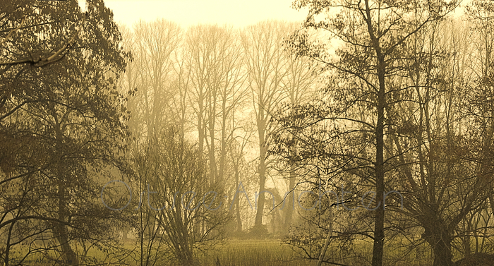 Nebel_Baeume_6.jpg