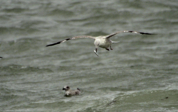 seagulls_screens.jpg
