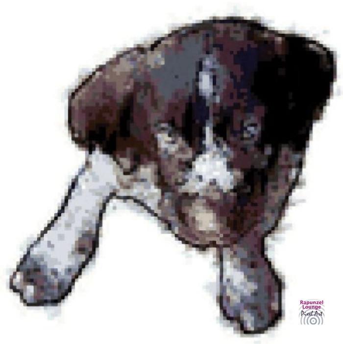 Hund_Drahthaar_Pixel_Art.jpg