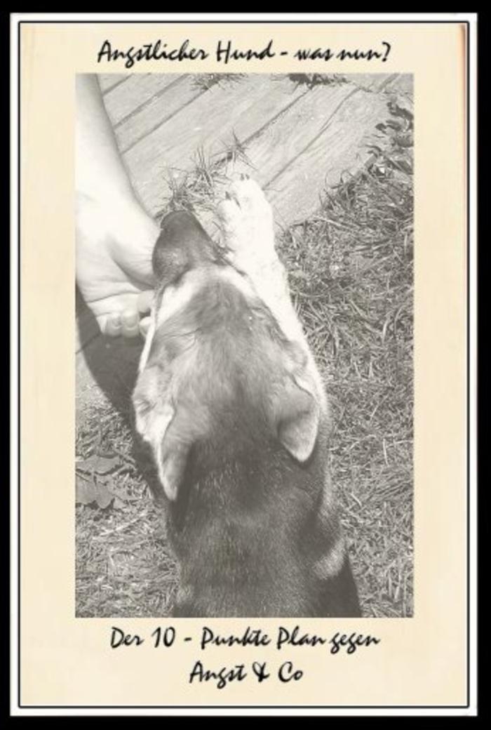 ängstlicherhund.jpg