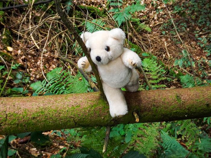 Teddybaeren_(6_von_15).jpg
