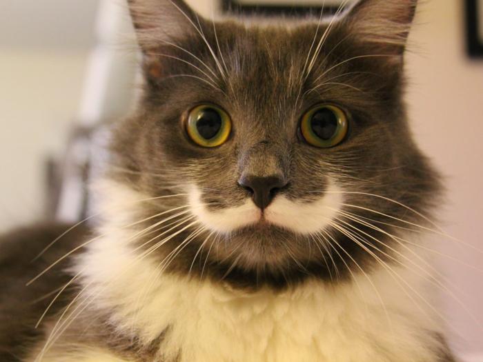 cat_.jpg