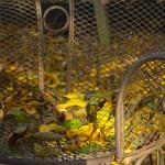 Herbstpavillon10
