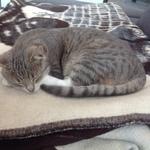 Katze  2014 11 23 15.14.55
