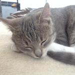 Katze  2014 11 23 15.14.34