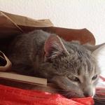 Katze  2014 11 08 10.08.24