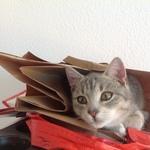 Katze  2014 11 08 10.09.58