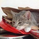 Katze  2014 11 08 10.08.17