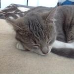 Katze  2014 11 23 15.15.03