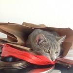 Katze 2014 11 08 10.07.42