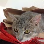 Katze 2014 11 08 10.07.48