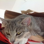 Katze 2014 11 08 10.08.49