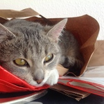 Katze 2014 11 08 10.08.35
