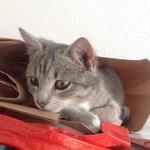 Katze 2014 11 08 10.09.44