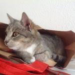 Katze 2014 11 08 10.09.36