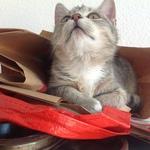 Katze 2014 11 08 10.09.51
