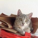 Katze 2014 11 08 10.09.54