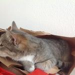 Katze 2014 11 08 10.10.07