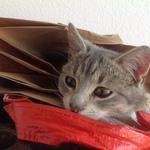 Katze 2014 11 08 10.10.12