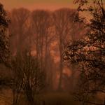 Nebel baeume 4