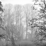 Nebel baeume sw