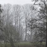 Nebel baeume 5