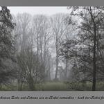 Nebel baeume text 1