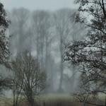 Nebel baeume 3
