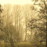 Nebel baeume 6